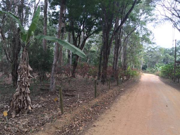 Imóvel Rural - Fazenda Floresta - Linhares/ES